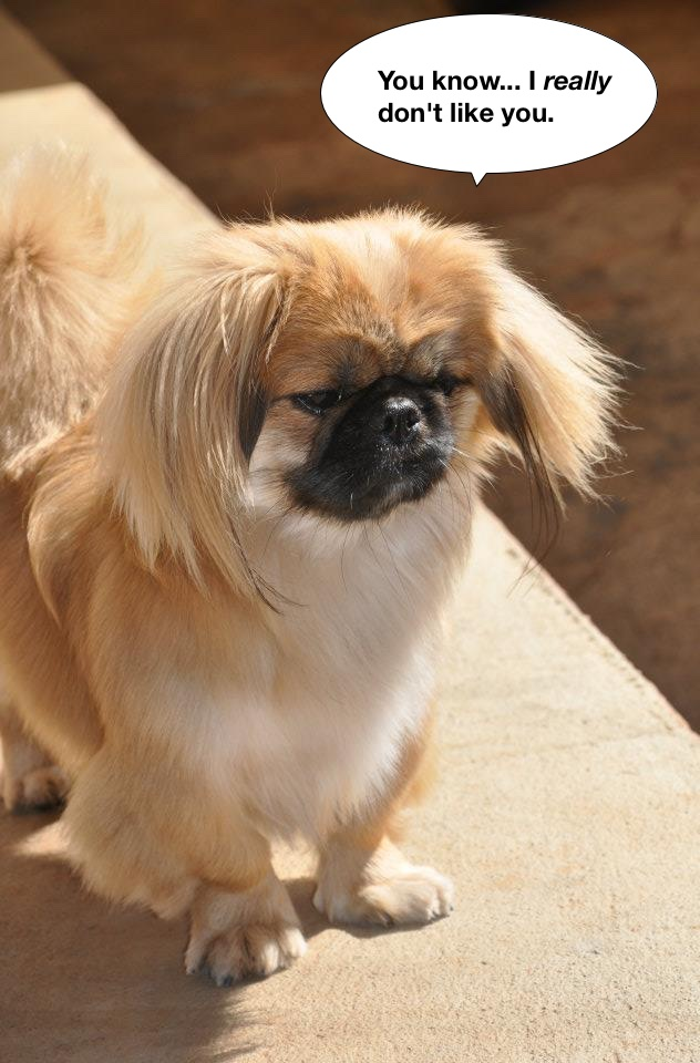 https://commons.wikimedia.org/wiki/File:Pekingese_with_2_years_old.jpg
