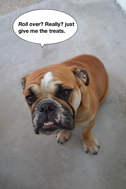 https://pixabay.com/en/english-bulldog-bulldog-pet-dog-228702/