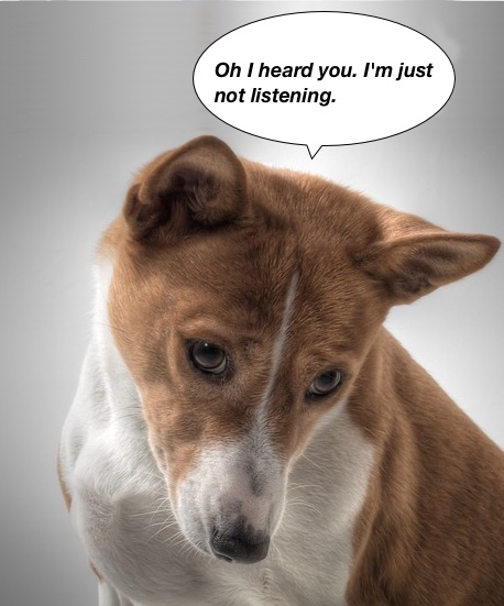 https://pixabay.com/en/dog-basenji-hundbild-sorry-601216/