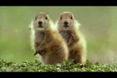 very funny talking animals from the BBC