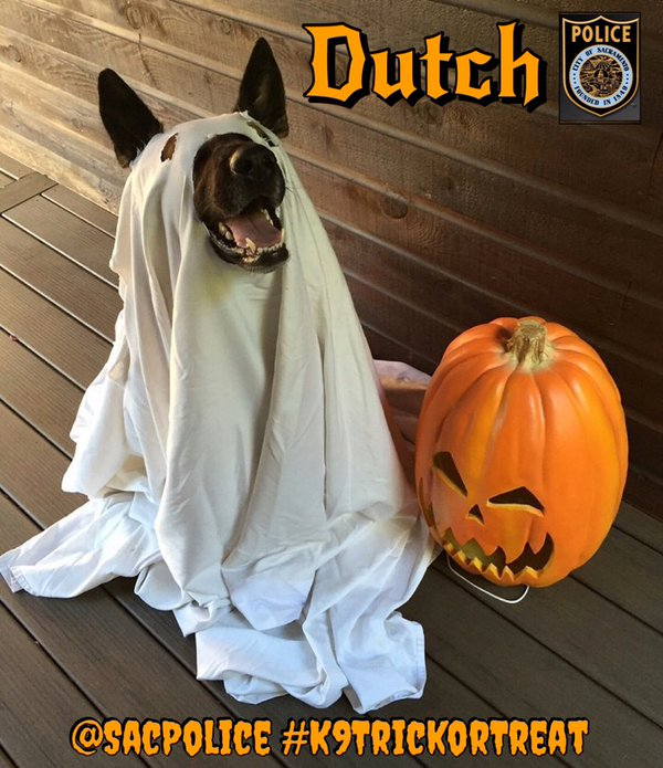Dutch goes trick or treating. @SacPolice.
