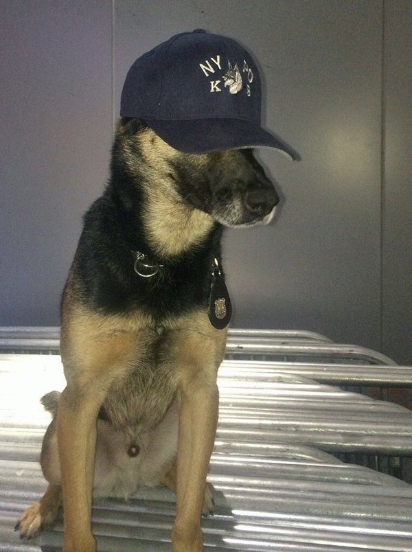 Timmy goes undercover at the vet. @NYPDNews.