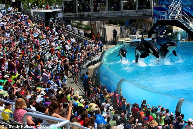 Fewer attendees at SeaWorld performances. Image Courtesy of dailymail.co.uk.