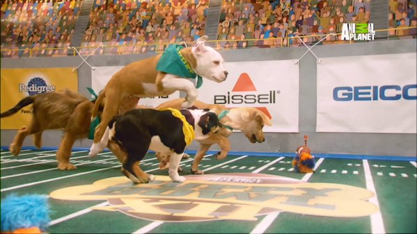 Puppy Bowl picture. Image Courtesy of gma.com.